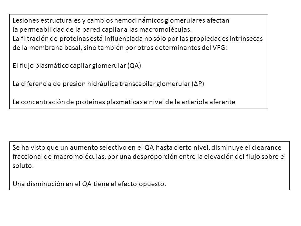 Lesiones estructurales y cambios hemodinámicos glomerulares afectan