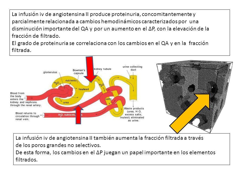 La infusión iv de angiotensina II produce proteinuria, concomitantemente y parcialmente relacionada a cambios hemodinámicos caracterizados por una disminución importante del QA y por un aumento en el ΔP, con la elevación de la fracción de filtrado.