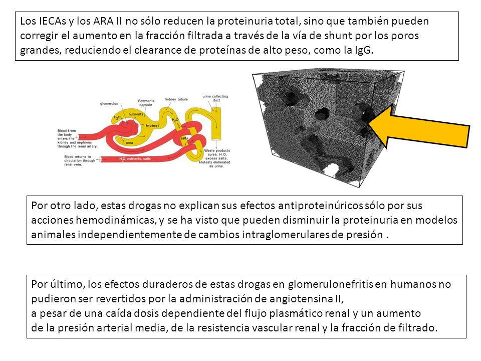 Los IECAs y los ARA II no sólo reducen la proteinuria total, sino que también pueden corregir el aumento en la fracción filtrada a través de la vía de shunt por los poros grandes, reduciendo el clearance de proteínas de alto peso, como la IgG.