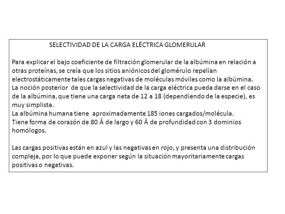 SELECTIVIDAD DE LA CARGA ELÉCTRICA GLOMERULAR