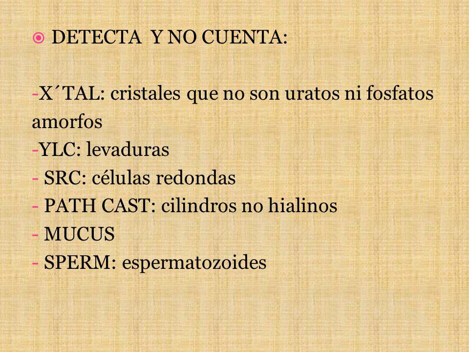 DETECTA Y NO CUENTA: -X´TAL: cristales que no son uratos ni fosfatos. amorfos. -YLC: levaduras. - SRC: células redondas.