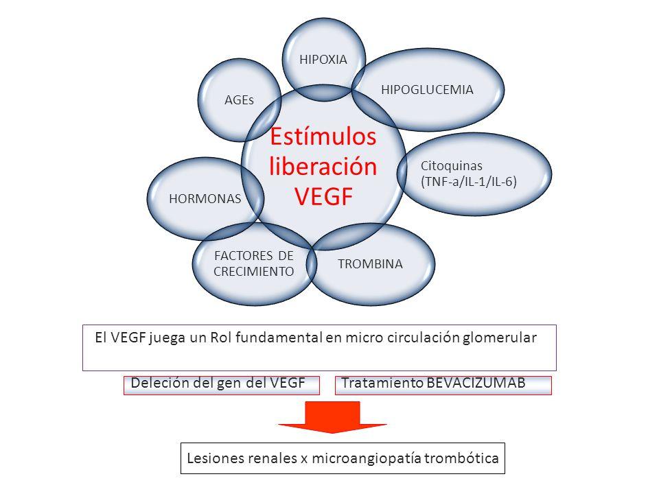 El VEGF juega un Rol fundamental en micro circulación glomerular