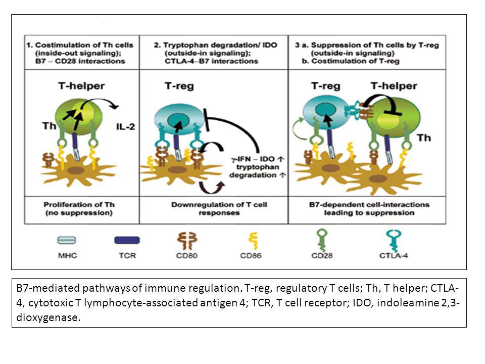 B7-mediated pathways of immune regulation