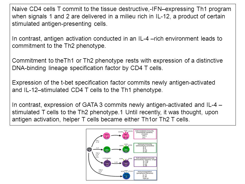 Naive CD4 cells T commit to the tissue destructive,-IFN–expressing Th1 program