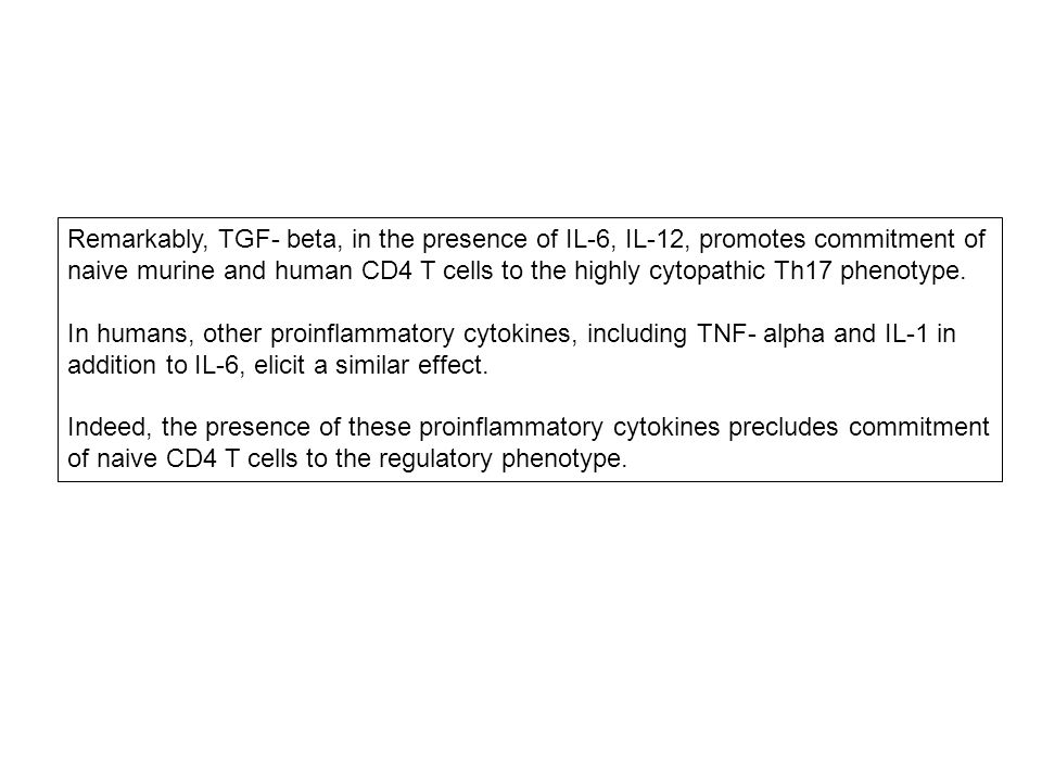 Remarkably, TGF- beta, in the presence of IL-6, IL-12, promotes commitment of naive murine and human CD4 T cells to the highly cytopathic Th17 phenotype.