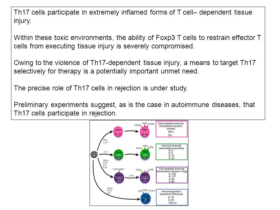 Th17 cells participate in extremely inflamed forms of T cell– dependent tissue injury.