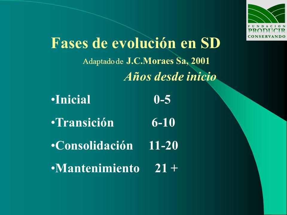 Fases de evolución en SD Adaptado de J.C.Moraes Sa, 2001