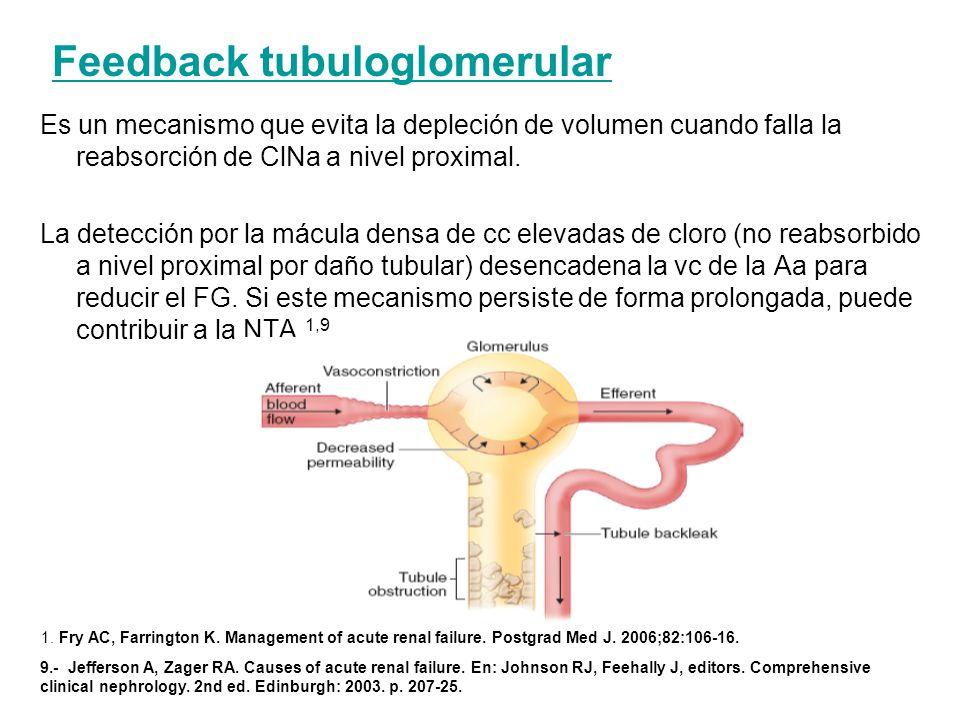Feedback tubuloglomerular