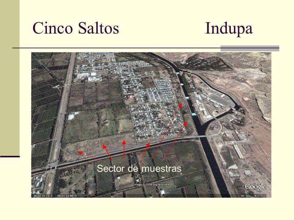 Cinco Saltos Indupa Sector de muestras