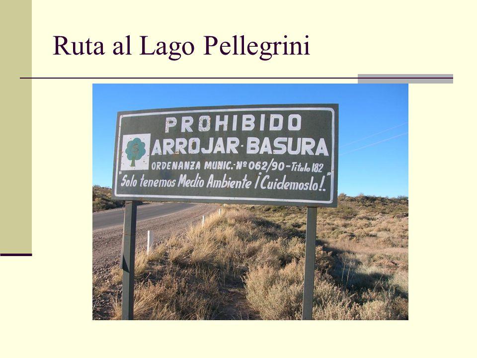Ruta al Lago Pellegrini