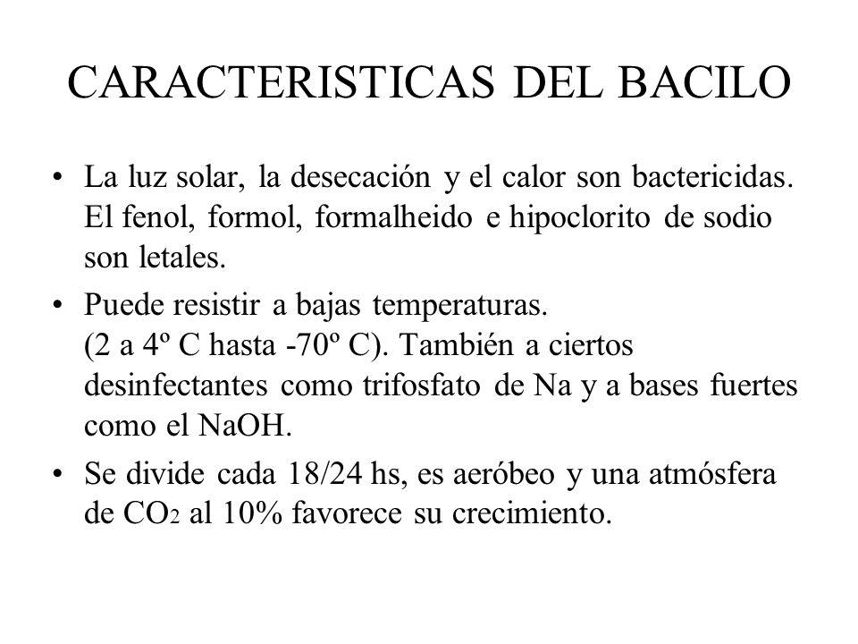 CARACTERISTICAS DEL BACILO