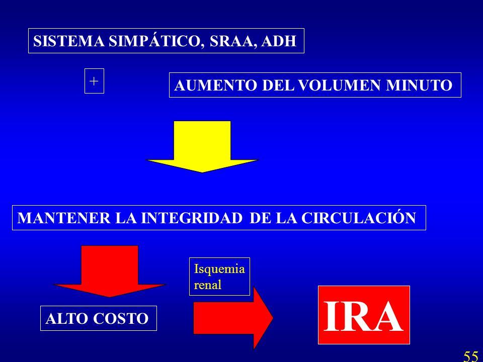 IRA SISTEMA SIMPÁTICO, SRAA, ADH + AUMENTO DEL VOLUMEN MINUTO