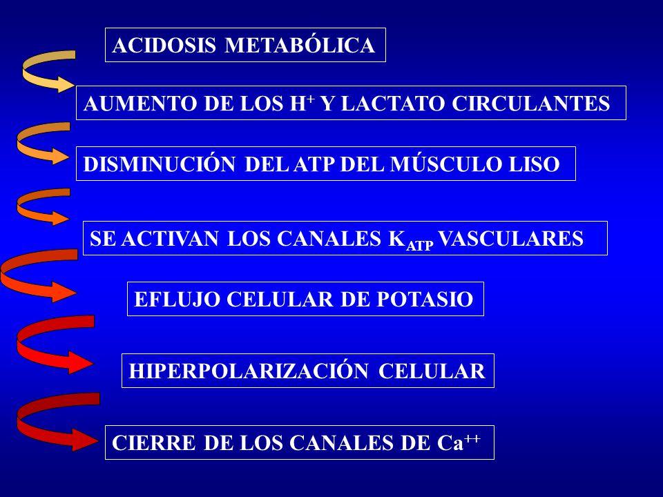 ACIDOSIS METABÓLICA AUMENTO DE LOS H+ Y LACTATO CIRCULANTES. DISMINUCIÓN DEL ATP DEL MÚSCULO LISO.