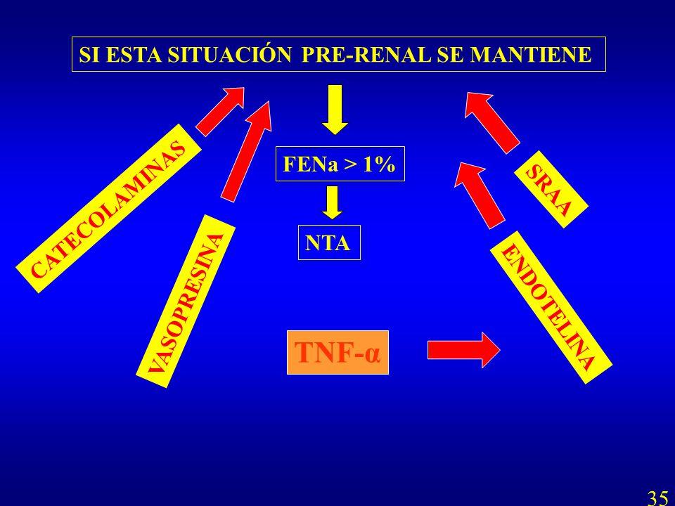 TNF-α SI ESTA SITUACIÓN PRE-RENAL SE MANTIENE FENa > 1%