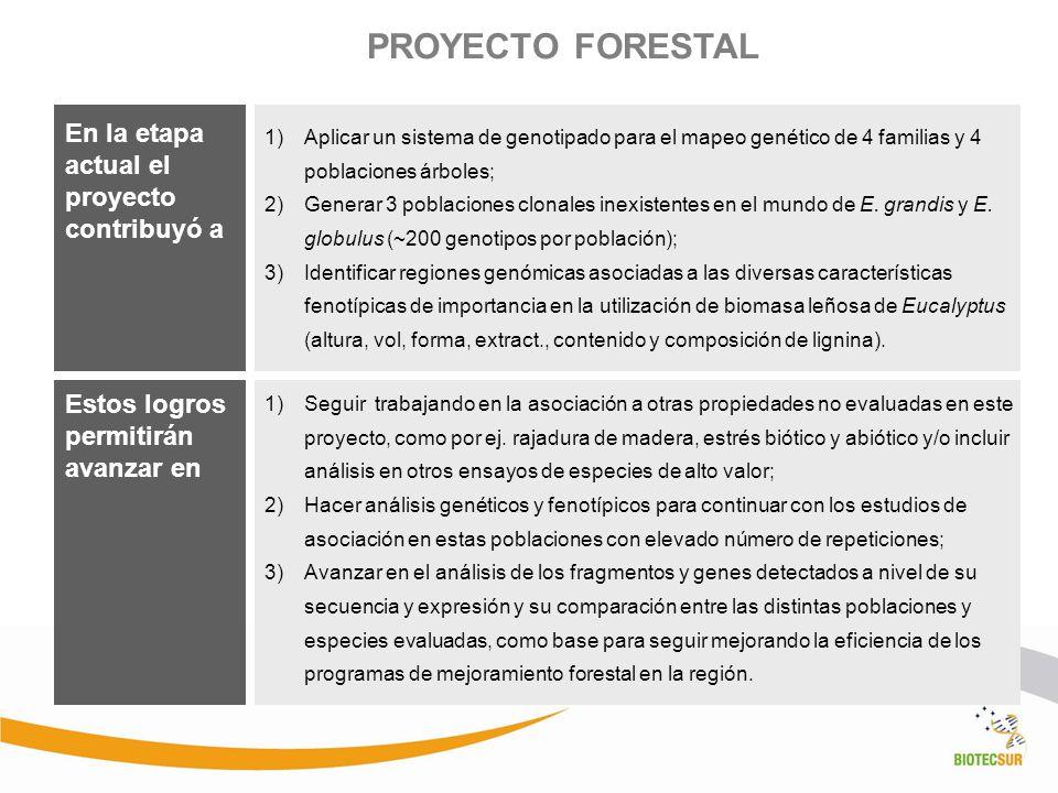 PROYECTO FORESTAL En la etapa actual el proyecto contribuyó a