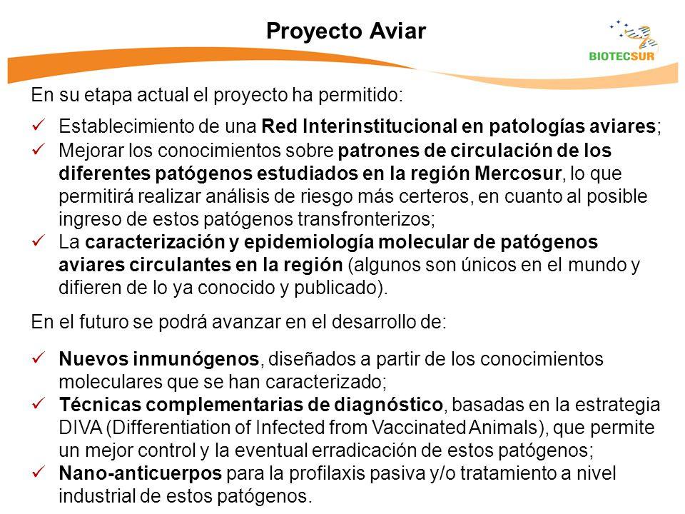 Proyecto Aviar En su etapa actual el proyecto ha permitido: