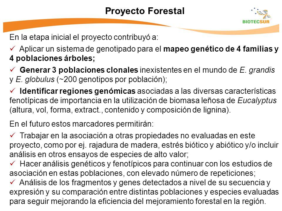 Proyecto Forestal En la etapa inicial el proyecto contribuyó a: