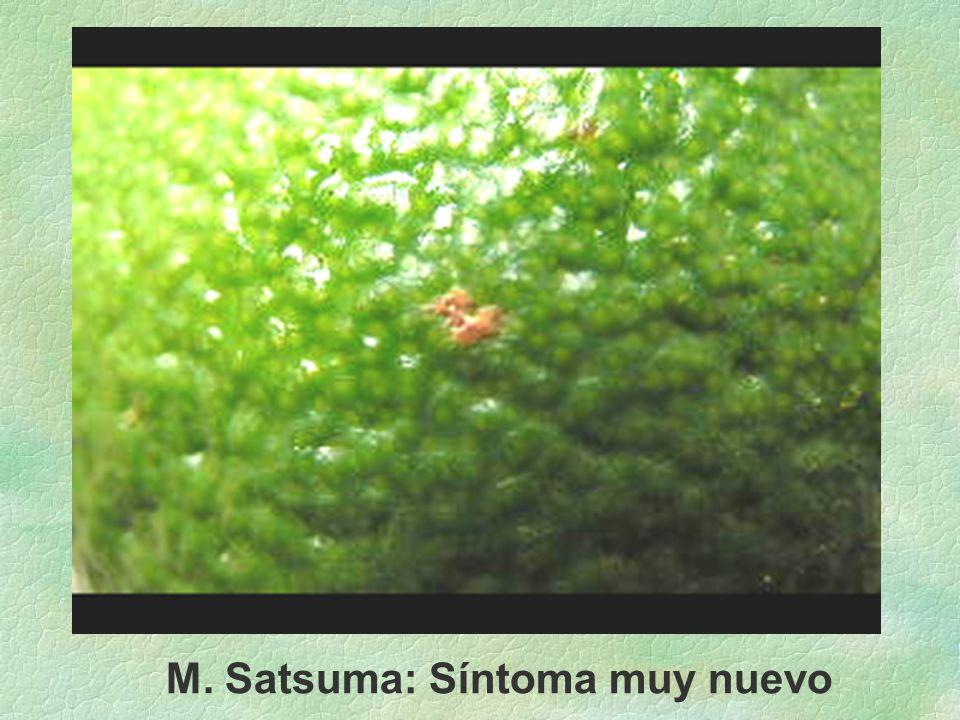 M. Satsuma: Síntoma muy nuevo
