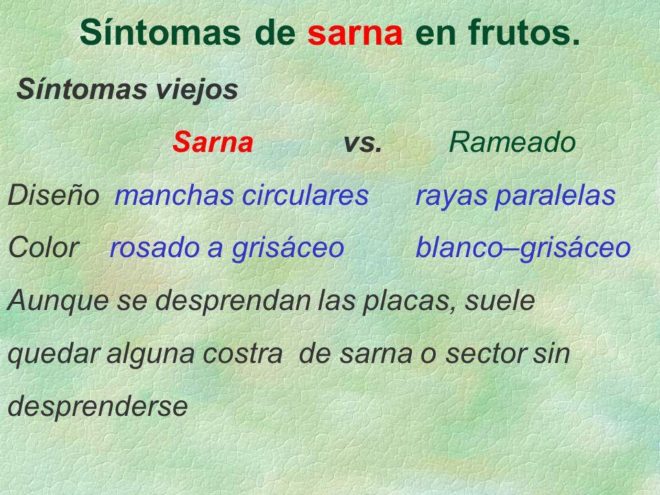 Síntomas de sarna en frutos.