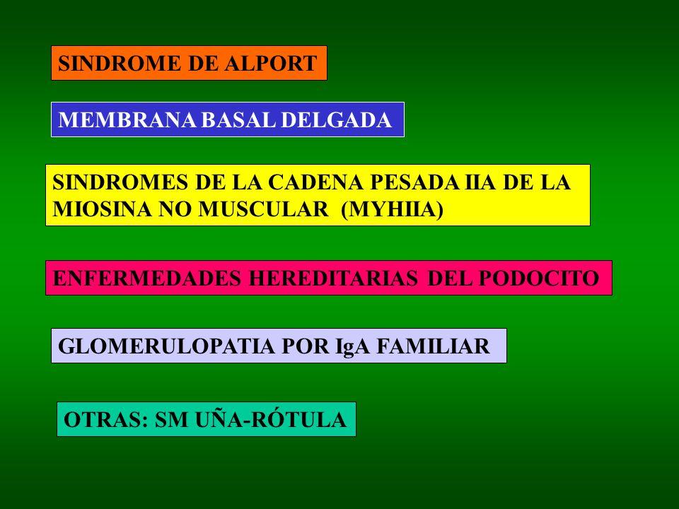 SINDROME DE ALPORT MEMBRANA BASAL DELGADA. SINDROMES DE LA CADENA PESADA IIA DE LA. MIOSINA NO MUSCULAR (MYHIIA)