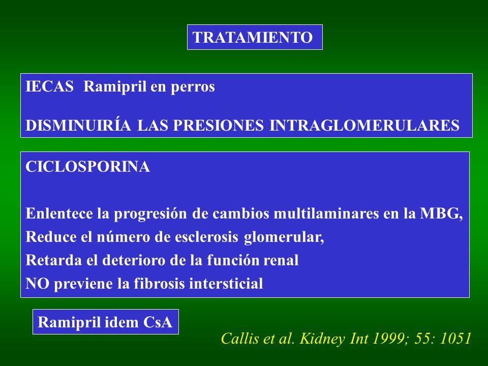 TRATAMIENTO IECAS Ramipril en perros. DISMINUIRÍA LAS PRESIONES INTRAGLOMERULARES. CICLOSPORINA.