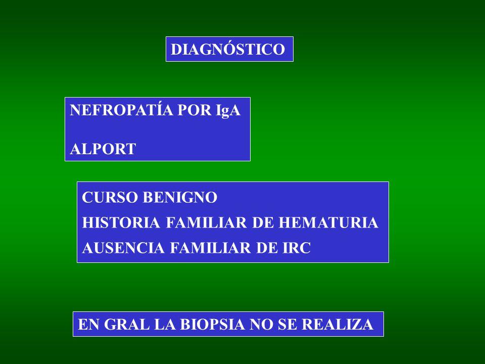 DIAGNÓSTICO NEFROPATÍA POR IgA. ALPORT. CURSO BENIGNO. HISTORIA FAMILIAR DE HEMATURIA. AUSENCIA FAMILIAR DE IRC.