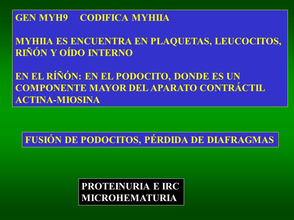 GEN MYH9 CODIFICA MYHIIA