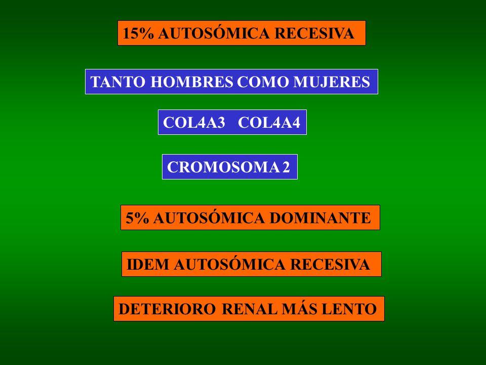 15% AUTOSÓMICA RECESIVA TANTO HOMBRES COMO MUJERES. COL4A3 COL4A4. CROMOSOMA 2. 5% AUTOSÓMICA DOMINANTE.