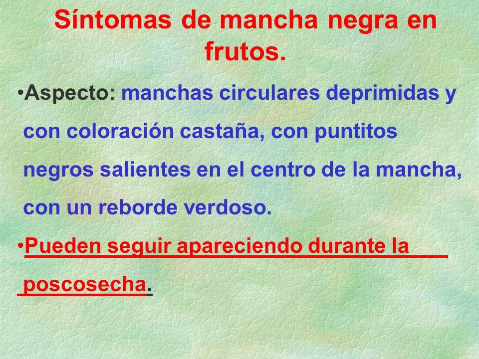 Síntomas de mancha negra en frutos.