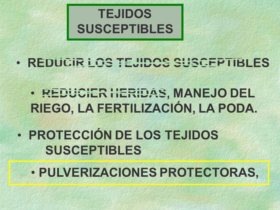 TEJIDOS SUSCEPTIBLES REDUCIR LOS TEJIDOS SUSCEPTIBLES. REDUCIER HERIDAS, MANEJO DEL RIEGO, LA FERTILIZACIÓN, LA PODA.