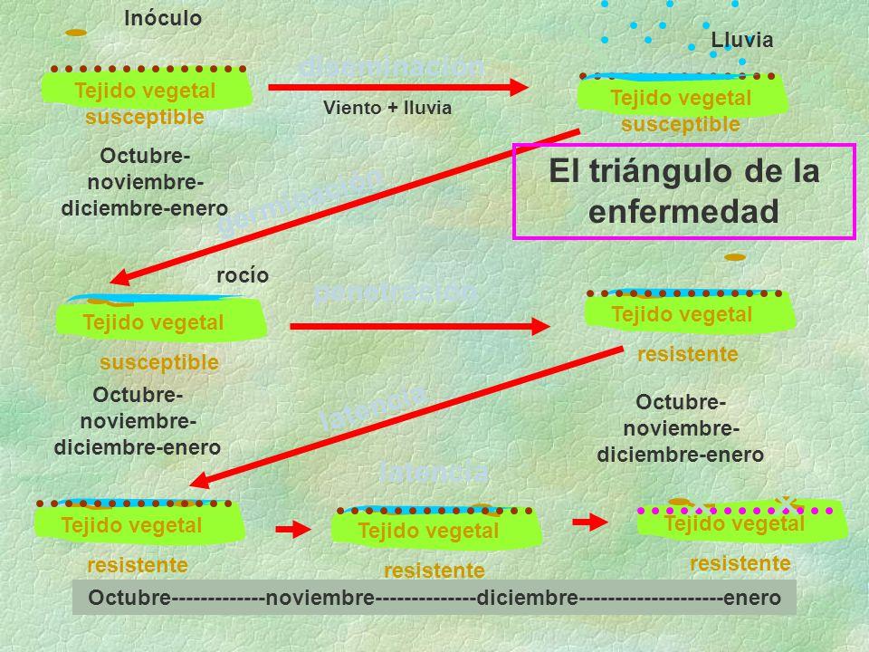 El triángulo de la enfermedad