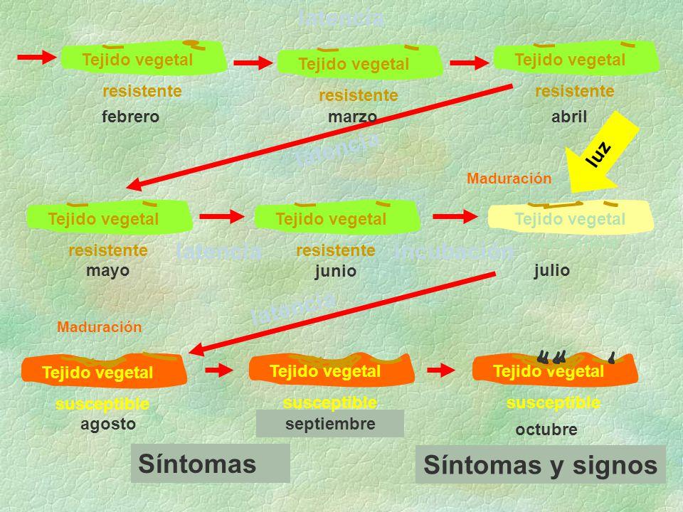 Síntomas Síntomas y signos latencia latencia latencia incubación