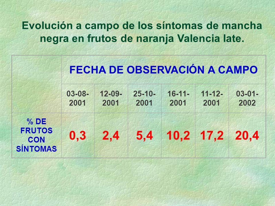 FECHA DE OBSERVACIÓN A CAMPO % DE FRUTOS CON SÍNTOMAS