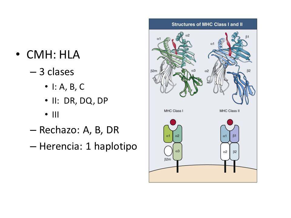 CMH: HLA 3 clases Rechazo: A, B, DR Herencia: 1 haplotipo I: A, B, C