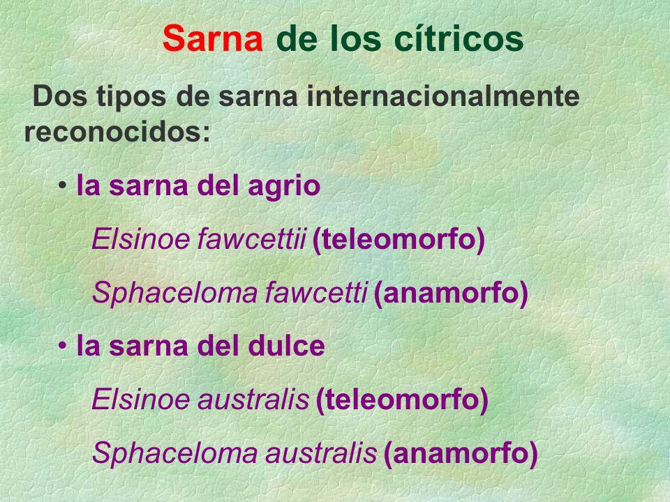 Sarna de los cítricos Dos tipos de sarna internacionalmente reconocidos: la sarna del agrio.