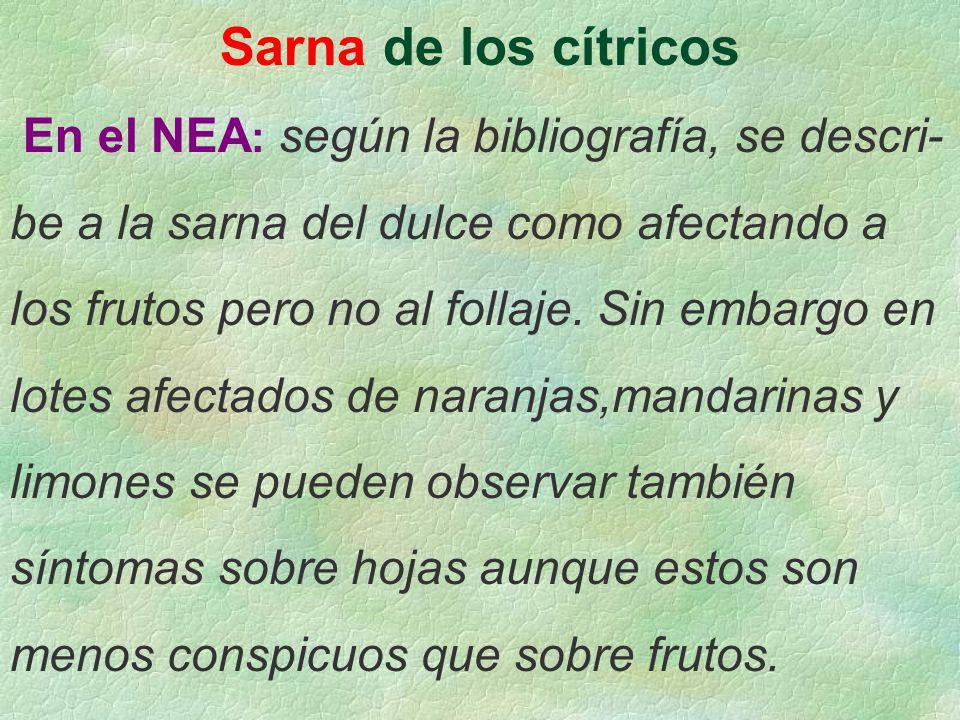 Sarna de los cítricos En el NEA: según la bibliografía, se descri-