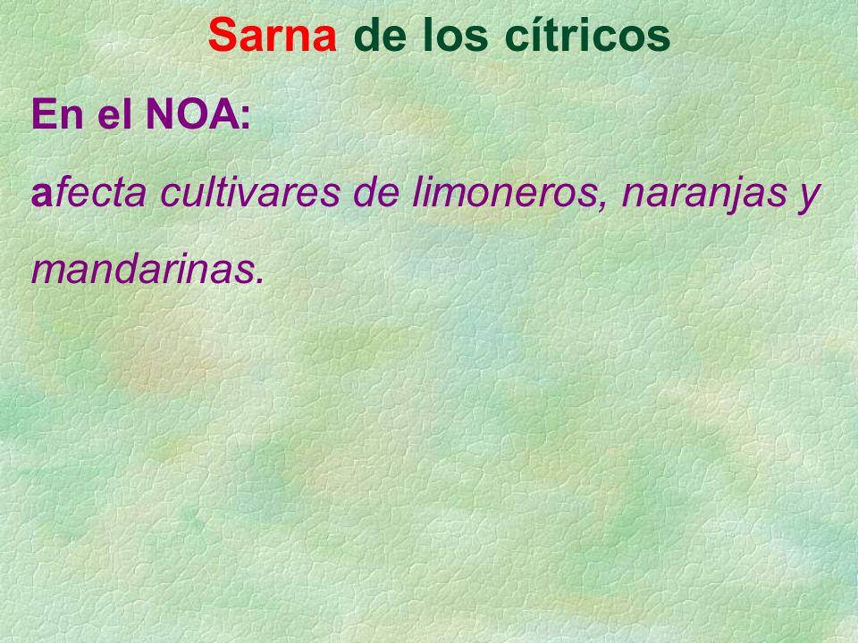 Sarna de los cítricos En el NOA: