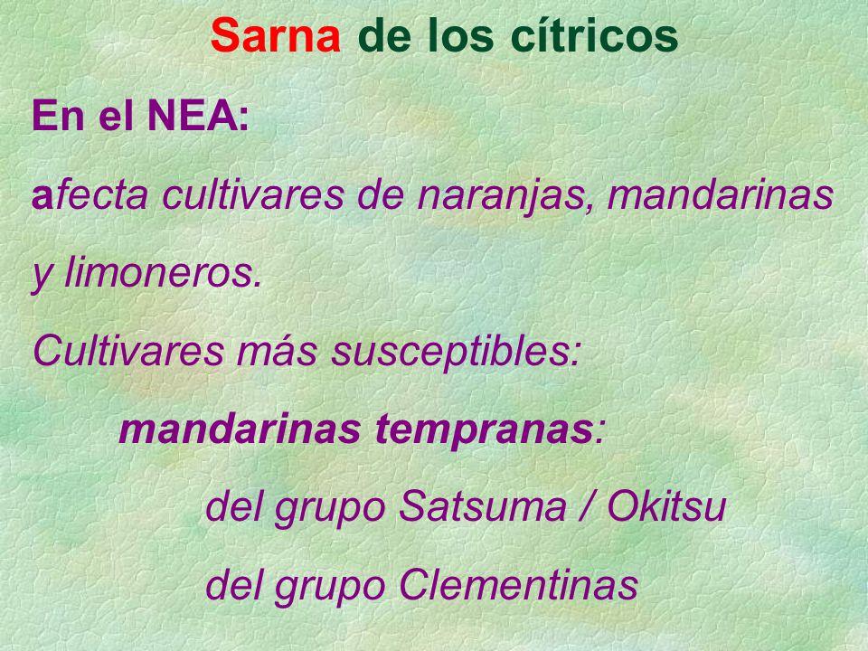 Sarna de los cítricos En el NEA: