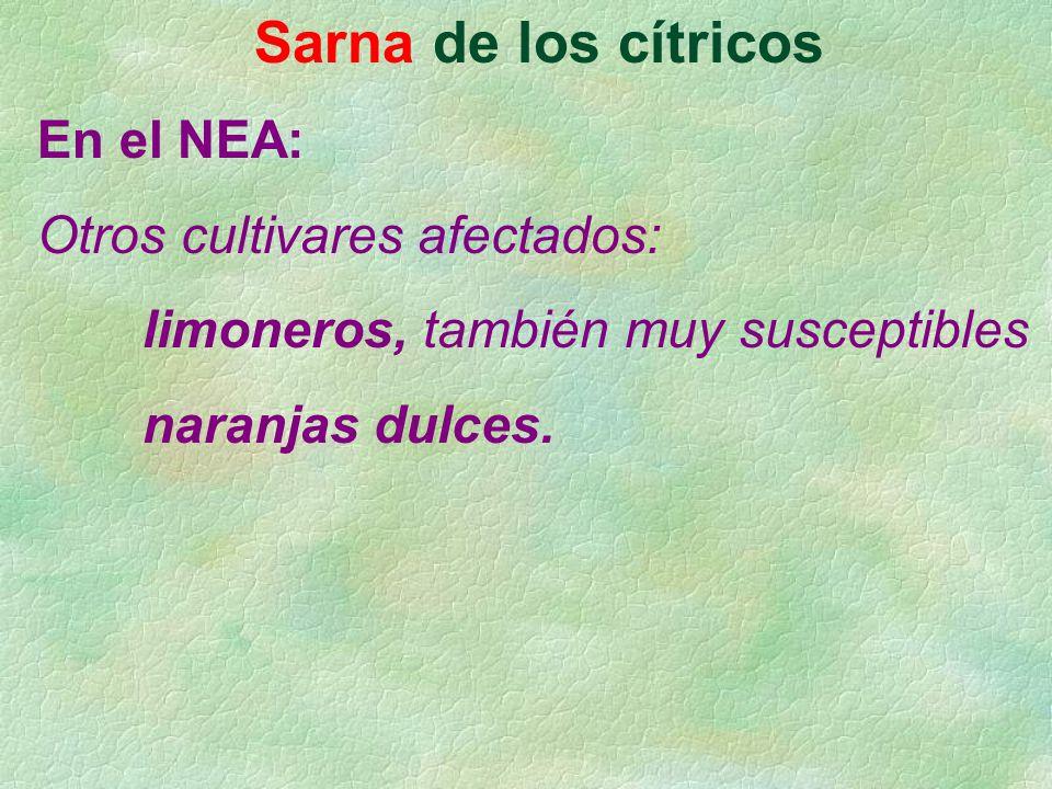 Sarna de los cítricos En el NEA: Otros cultivares afectados: