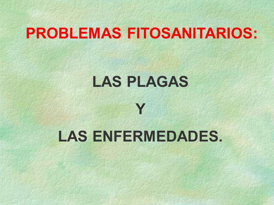 PROBLEMAS FITOSANITARIOS: