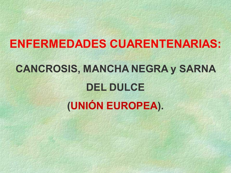 ENFERMEDADES CUARENTENARIAS: CANCROSIS, MANCHA NEGRA y SARNA