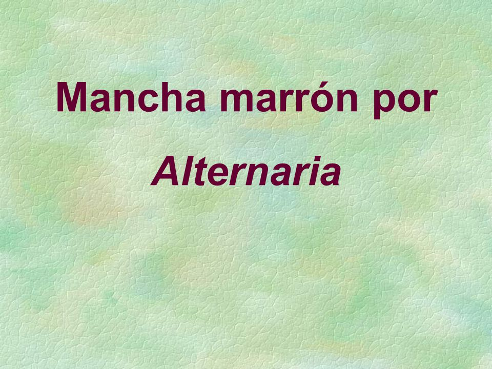 Mancha marrón por Alternaria