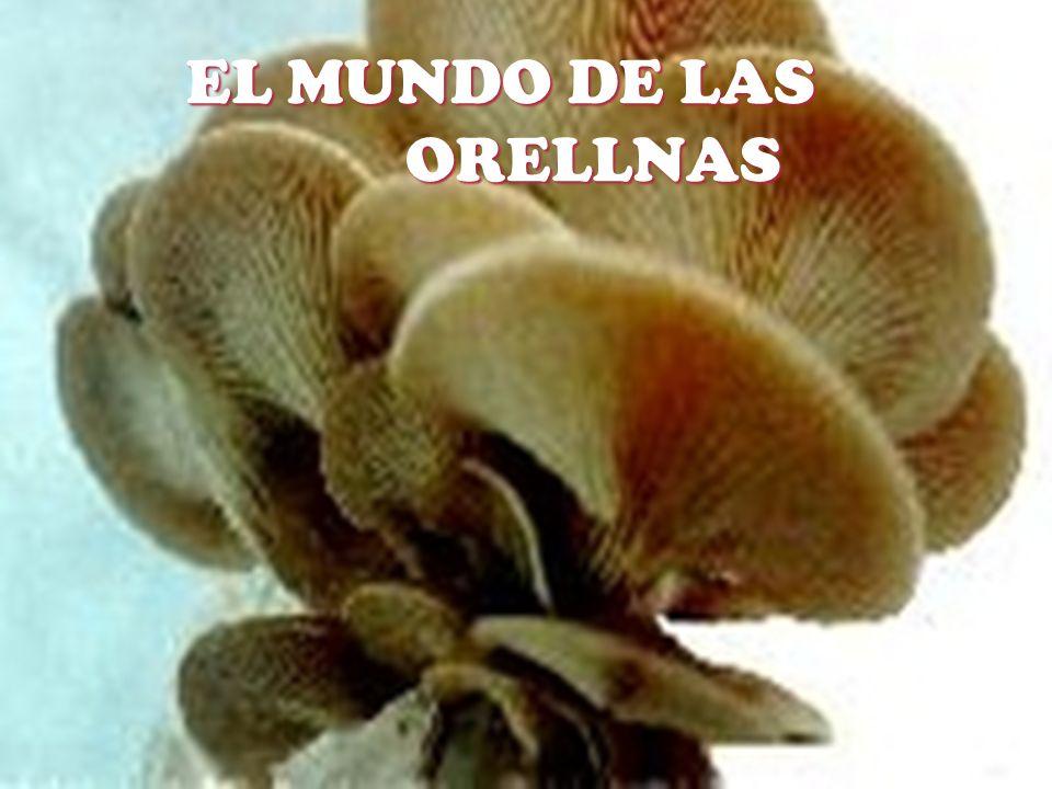 EL MUNDO DE LAS ORELLNAS