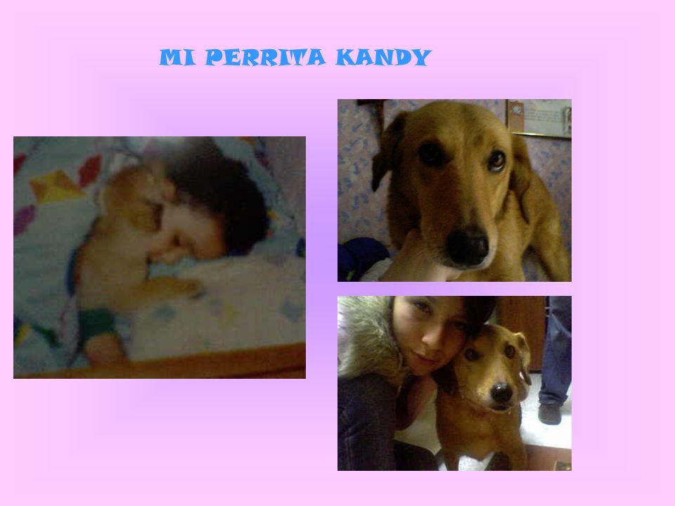 MI PERRITA KANDY