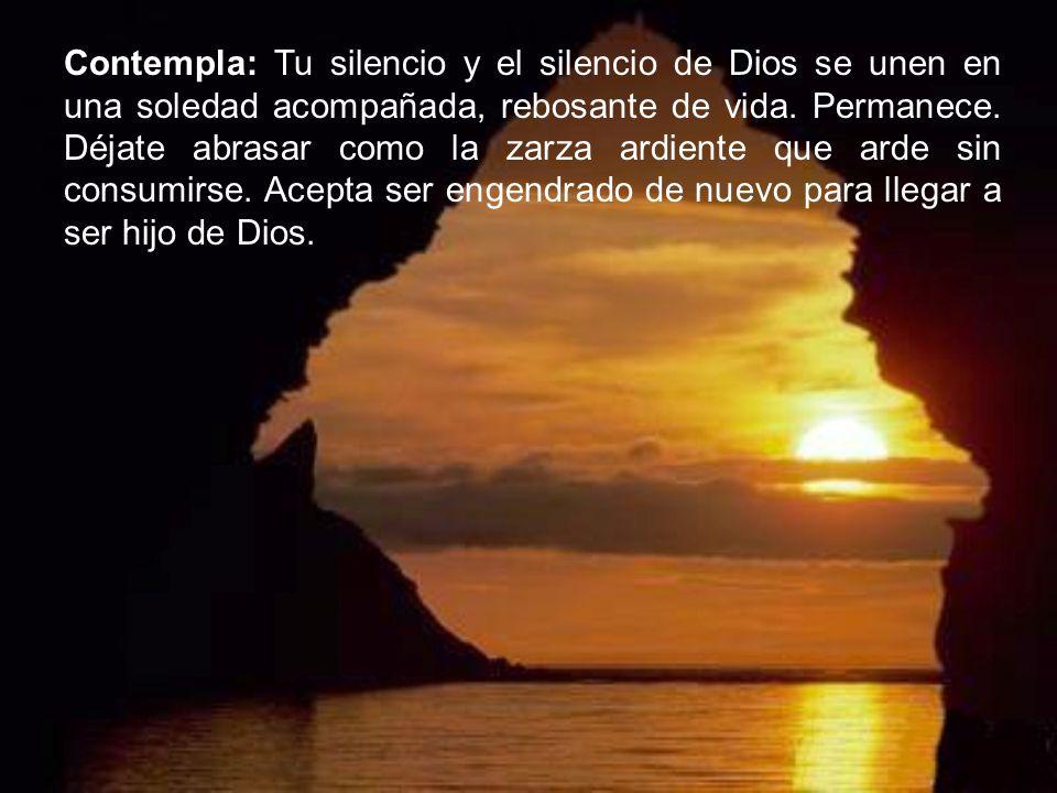 Contempla: Tu silencio y el silencio de Dios se unen en una soledad acompañada, rebosante de vida.