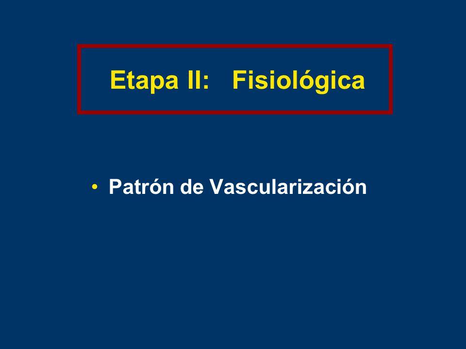 Etapa II: Fisiológica Patrón de Vascularización