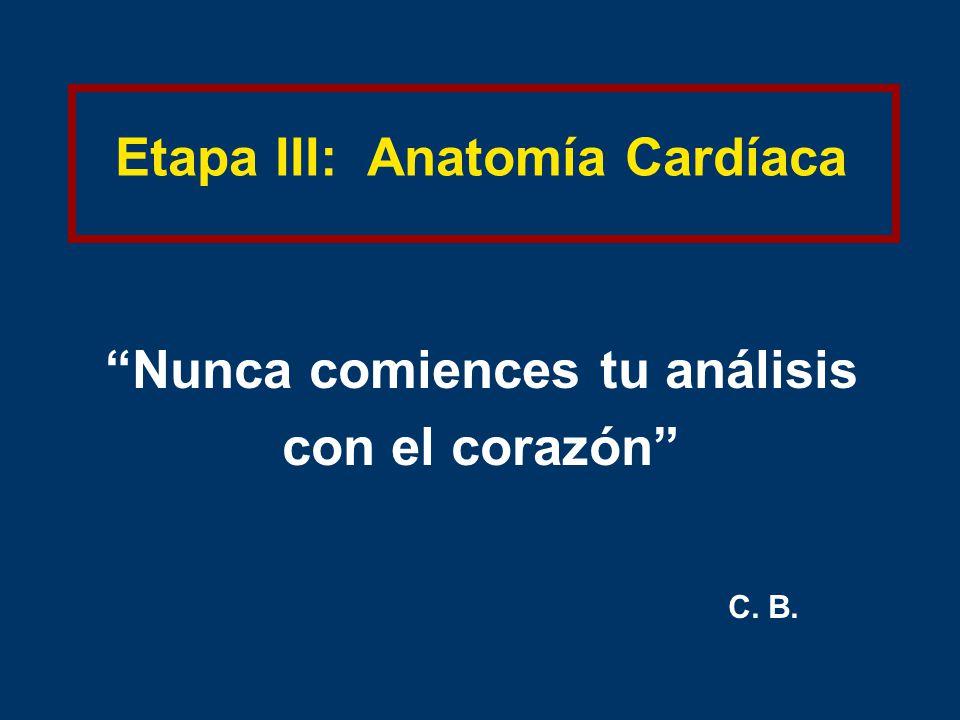 Etapa III: Anatomía Cardíaca