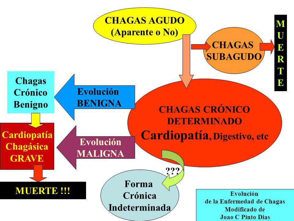 Cardiopatía, Digestivo, etc de la Enfermedad de Chagas