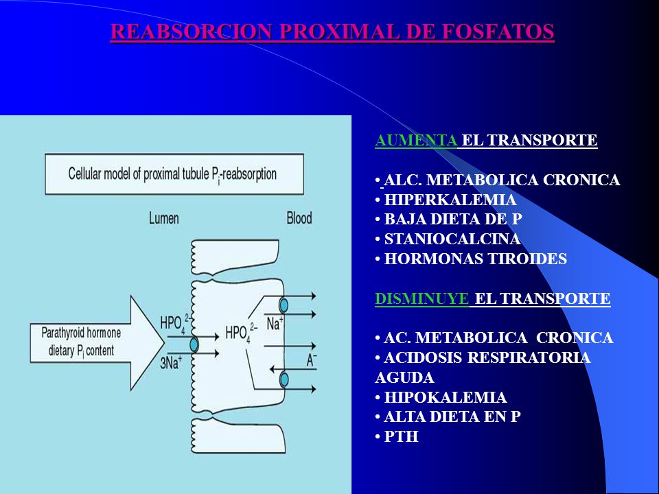 REABSORCION PROXIMAL DE FOSFATOS