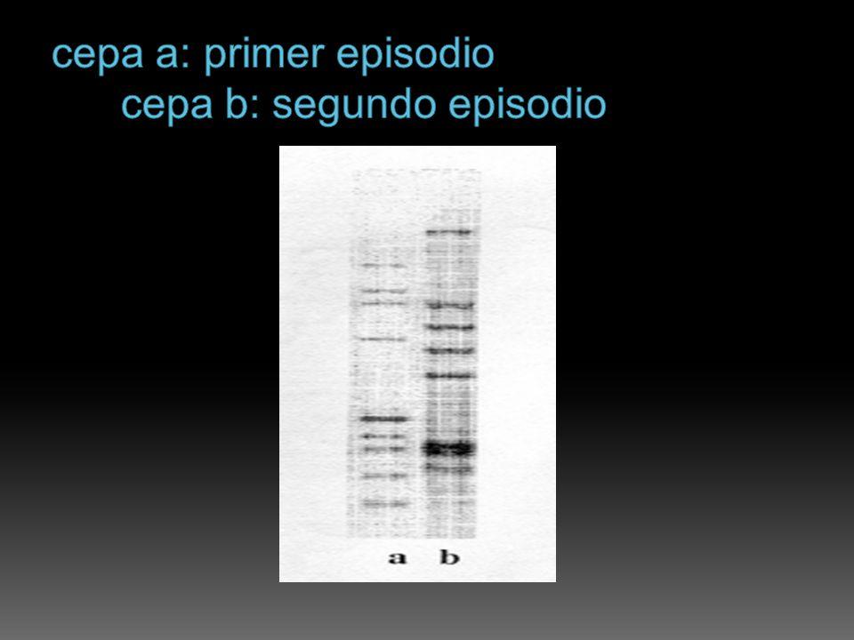 cepa a: primer episodio cepa b: segundo episodio
